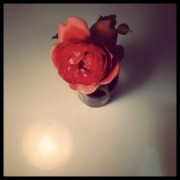 flowerforjune