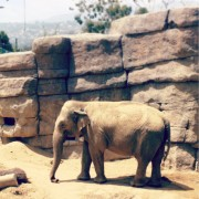 CW_elephant