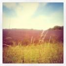 Lavender Fields - Cotswolds